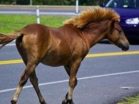 Συναγερμός στη Λάρισα: Κρούσματα Πυρετού του Δυτικού Νείλου σε άλογα