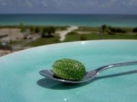 Τα μικρότερα καρπούζια του κόσμου