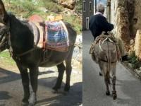 Φροντίδα ιπποειδών - Το πρόγραμμα των επισκέψεων από την Φιλοζωική Κρήτης