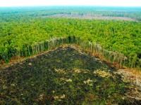 Στοιχεία-σοκ: Η αποψίλωση στον Αμαζόνιο εκτοξεύτηκε τον Νοέμβριο κατά 103%