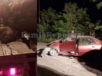 Στην Εντατική 63χρονος οδηγός μετά από τροχαίο με αγριογούρουνο (φωτο)