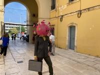 Ο κορωνοκέφαλος έκανε βόλτα στα Δικαστήρια Χανίων