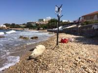 Μετά το θάνατο της φώκιας της Αλοννήσου η Κρήτη δίνει το παράδειγμα