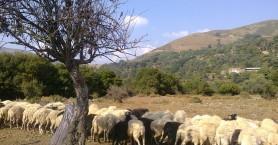 Xάνουν δικαιώματα οι κτηνοτρόφοι χωρίς τοπογραφικά για βοσκοτόπια