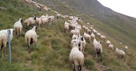 Καταστρέφεται η κτηνοτροφία απο ασθένειες και
