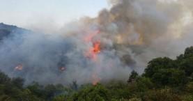 Δασική πυρκαγιά στο Φαρακλό Λακωνίας
