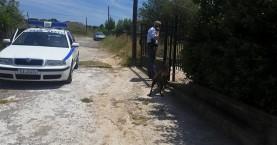 38χρονος σε αμόκ: Σκότωσε δύο σκυλιά και απειλεί να αυτοκτονήσει