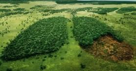 WWF: Στα ύψη τα επίπεδα αποψίλωσης των δασών έως το 2030