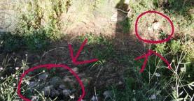 Τουλάχιστον 11 ζώα δηλητηριασμένα σε Γαλατά και Νέα Χώρα του Δήμου Χανίων