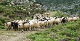 Σε ετοιμότητα για νέα κρούσματα καταρροικού πυρετού στην Κρήτη