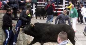 Το έσκασε ταύρος και τραυμάτισε 10 άτομα κι ένα παιδί!