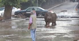 Γεωργία: Δέκα νεκροί από πλημμύρες - «Δραπέτευσαν» άγρια ζώα