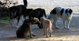 Σκύλος δάγκωσε αγοράκι 3,5 ετών – Μεταφέρθηκε στο Νοσοκομείο!
