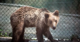 H WIND στο πλευρό του ΑΡΚΤΟΥΡΟΥ υιοθετώντας έναν αξιολάτρευτο αρκούδο