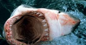 Άβολες αλήθειες πίσω από το δάγκωμα του καρχαρία