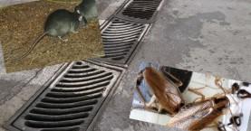 Καταγγελία: Ποντίκια και κατσαρίδες στην Παλιά Πόλη των Χανίων