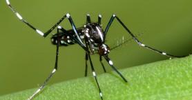 Έναρξη εφαρμογών προγράμματος καταπολέμησης κουνουπιών
