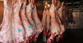 Αθρόα εισροή αρνιών εκτός Κρήτης στο νησί καταγγέλλουν οι κτηνοτρόφοι