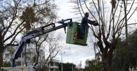 Κλαδεύουν τα δέντρα στην Κωνσταντίνου Μητσοτάκη
