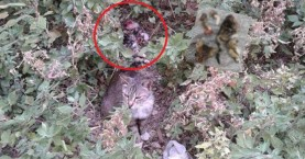 Ρέθυμνο: Βρήκε το πτώμα γάτας τεμαχισμένο στον κήπο της πολυκατοικίας της