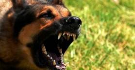 Κατέληξε στο Νοσοκομείο μετά από επίθεση σκύλου σε πάρκο της Κρήτης