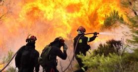 Έντονη ανησυχία από το WWF Ελλάς για τις δασικές πυρκαγιές