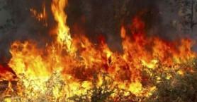 Ανυπολόγιστη καταστροφή στο Σελεκάνο - Στάχτη πάνω από 2500 στρέμματα
