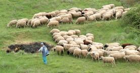 Έκτακτες κρατικές ενισχύσεις 2 εκατ. ευρώ σε κτηνοτρόφους των Χανίων