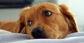 Επτά σκυλιά δηλητηριάστηκαν σε μια ημέρα από φόλες στο Κοντομαρί Χανίων