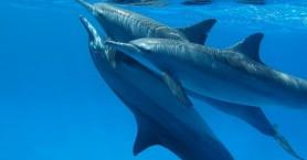 Ρεσιτάλ δελφινιών κοντά στη Γαύδο (βίντεο)