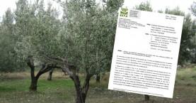 ΕΛΓΑ: Ούτε 1 ευρώ για την χαμένη ελαιοπαραγωγή στην Κρήτη
