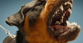 Ακόμα μια επίθεση σκύλου σε παιδί στην Κρήτη