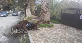 Φοίνικας στα Χανιά πλάκωσε αυτοκίνητο κοντά σε σχολείο! (φωτο)