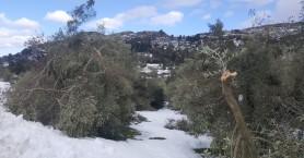 Οι Βουλευτές Κρήτης ΣΥΡΙΖΑ για τις ζημιές απο τον χιονιά
