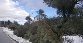 Τι ανακοίνωσε ο ΕΛΓΑ για τις ζημιές απο τον χιονιά