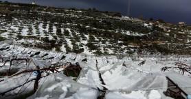 Ο χιονιάς έθαψε τις αμπελοκαλλιέργειες  (φωτο)