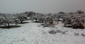 Αναγγελία ζημιάς από τη χιονόπτωση για Θέρισο, Κεραμειά, Ν.Κυδωνία & Σούδα