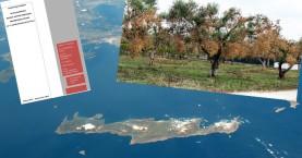 «Θωρακίζεται» η Κρήτη για το βακτήριο που ξεραίνει τα ελαιόδεντρα