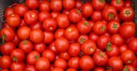 Κίσσαμος: Φόρτωσε πάνω από έναν τόνο ντομάτες στο φορτηγό και έγινε καπνός