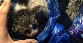 Καταγγέλλουν ότι νεωκόρος στη Σητεία πέταξε γατάκια στα σκουπίδια
