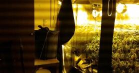 Δενδρύλλια κάνναβης σε σπίτι - εργαστήριο υδροπονικής καλλιέργειας