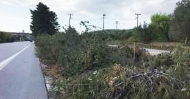 Παρέμβαση Δασαρχείου για την κοπή πεύκων στον ΒΟΑΚ στα Χανιά