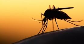 Πρόγραμμα καταπολέμησης κουνουπιών στη Π.Ε. Ηρακλείου