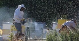 Ενημέρωση μελισσοκόμων απο την Δ/νση Αγροτικής Οικονομίας Χανίων