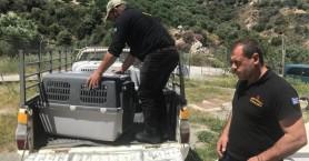 Σημαντικός αριθμός στειρώσεων αδέσποτων στο Κυνοκομείο του Δήμου Ηρακλείου