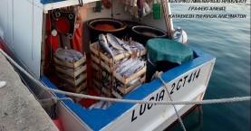 Εκποιούνται τα ψάρια που κατασχέθηκαν από το ιταλικό ψαράδικο