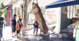 Ψαράδες έπιασαν έναν καρχαρία 300 κιλών (φωτο)