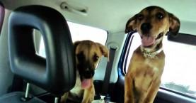 Αίσιο τέλος για τα πέντε «φυλακισμένα» σκυλάκια σε σπίτι στα Χανιά
