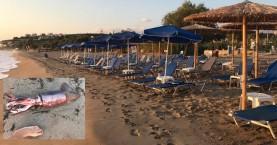 Απρόσμενη συνάντηση για περιπατητή στην παραλία των Καλυβών στα Χανιά