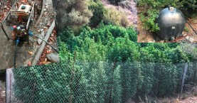 Βρέθηκε άριστα οργανωμένη φυτεία κάνναβης - Γνωστός ο καλλιεργητής (φωτο)